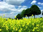 Natur, Idylle - Bäume und Wiese